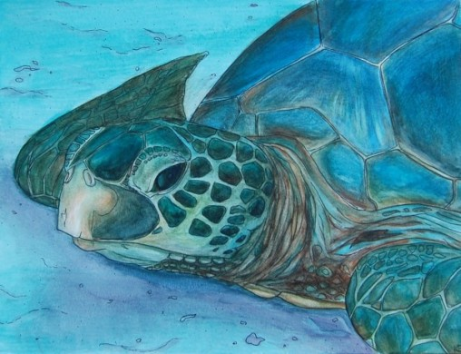 "Honu • 2011 • Ink and watercolor on paper • 11""x14"""