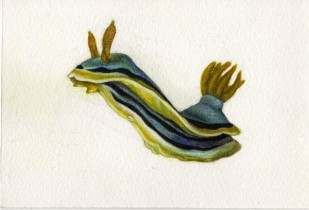 "Nudibranch • 2012 • Watercolor on paper • 3""x5"""
