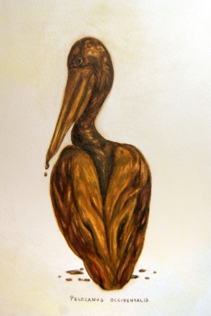 "Oil Spill: Pelicans occidentalis • 2011 • Watercolor on paper • 11""x14"""