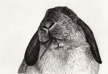 "Bun • 2014 • Ink on Paper • 4x6"""
