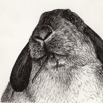 Bun • 2014 • Ink on Paper • 4x6""