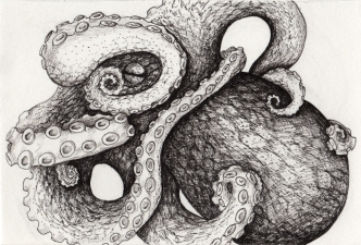 Octopus • 2014 • Ink on Paper • 4x6""