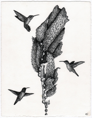 Hummingbirds & Kelp • 2016 • Pen and Ink on paper • 8x10""